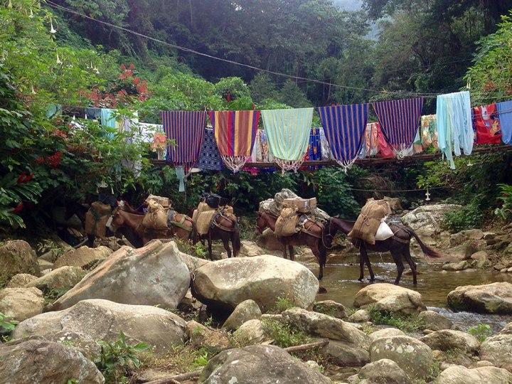 frontier-free-drifting-hammocks-horses-ciudad-perdida