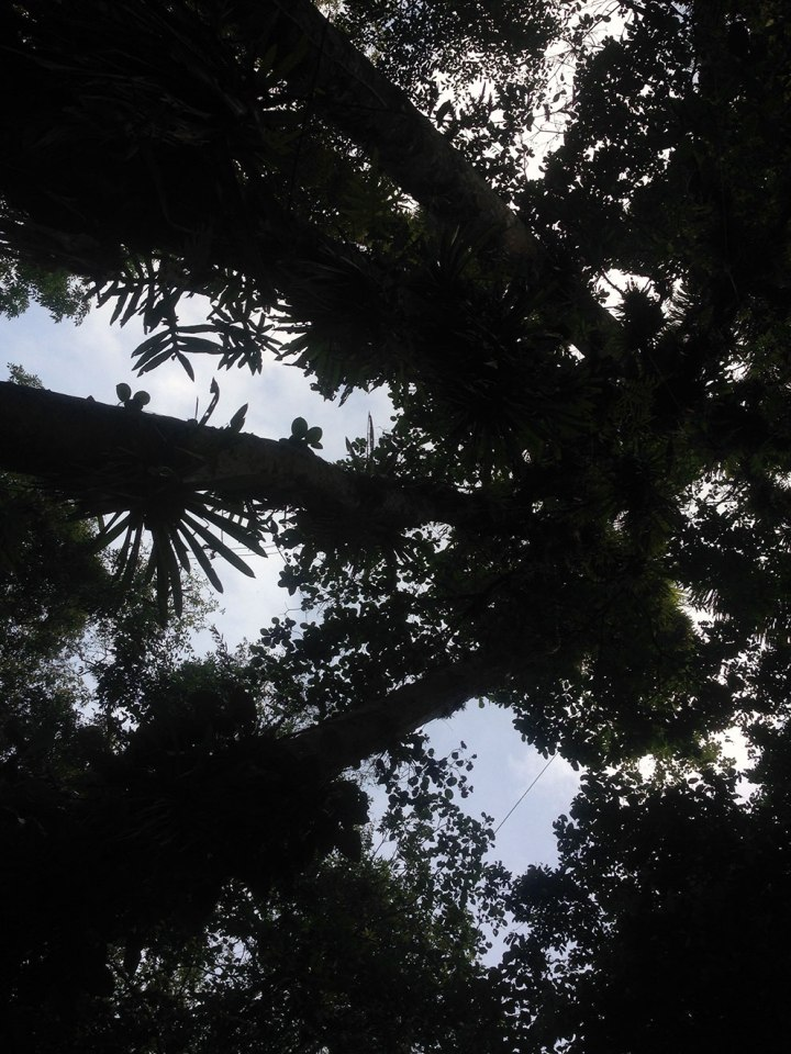 frontier-free-drifting-under-the-trees-ciudad-perdida