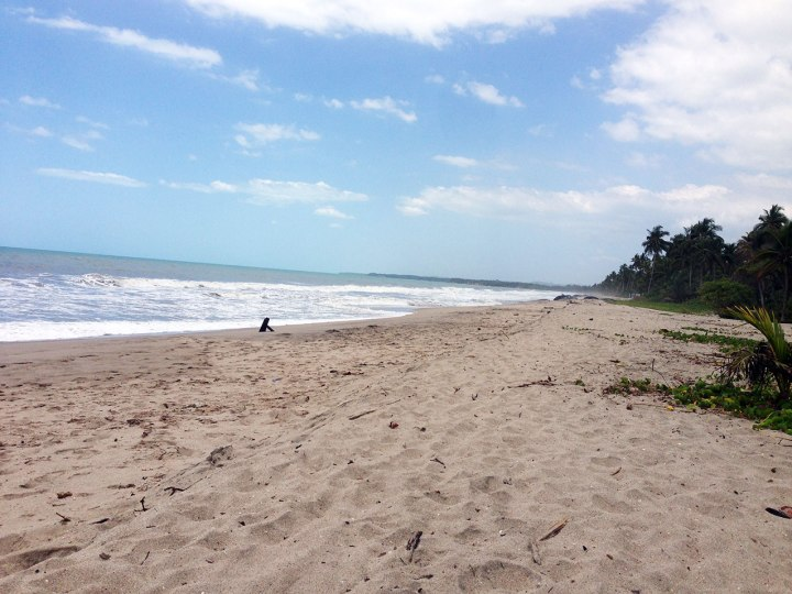 frontier-free-drifting-palomino-beach