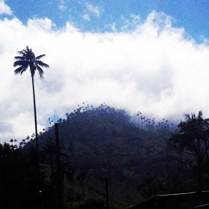 frontier-free-drifting-hill-of-trees-salento-colomba