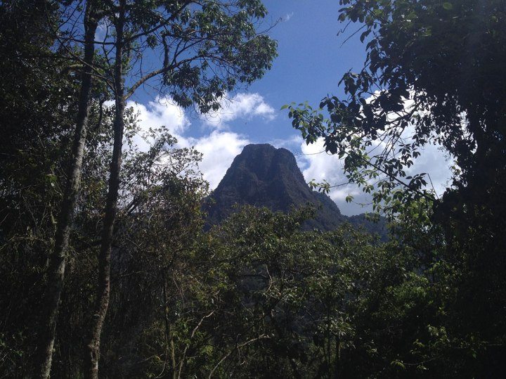 frontier-free-drifting-mountain-through-trees-salento-colombia