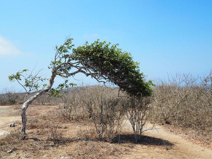 frontier-free-drifting-isa-de-la-plata-green-tree