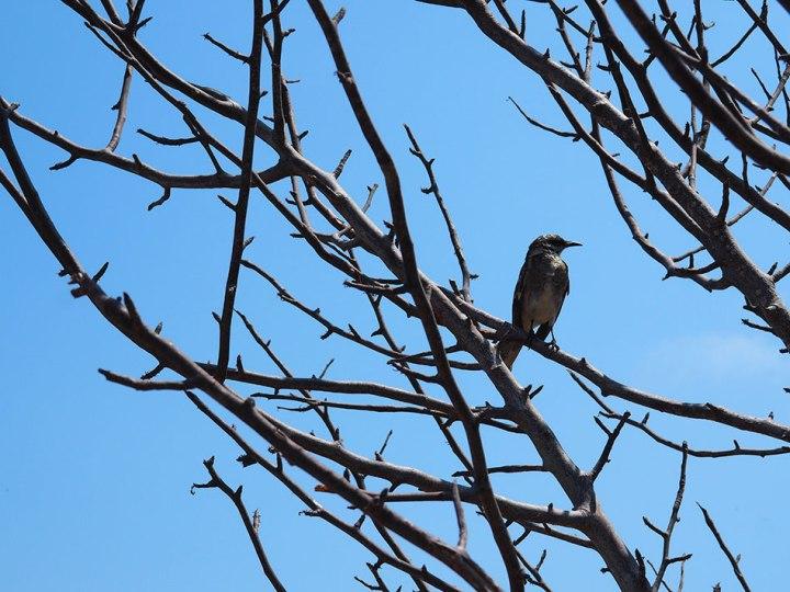 frontier-free-drifting-isla-de-la-plata-bird-in-bush