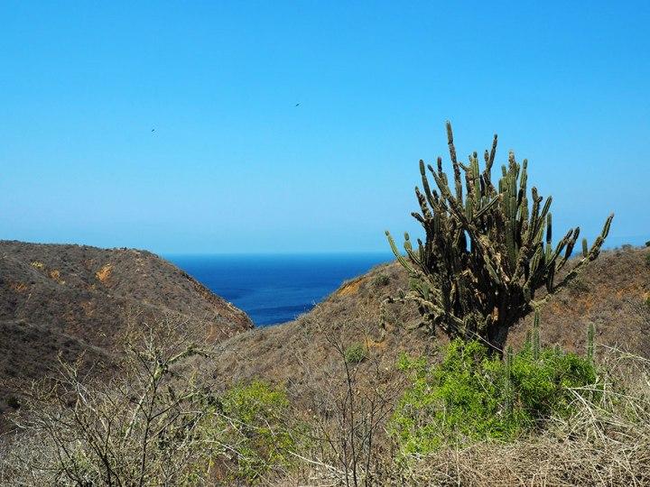 frontier-free-drifting-isla-de-la-plata-cactus-landscape