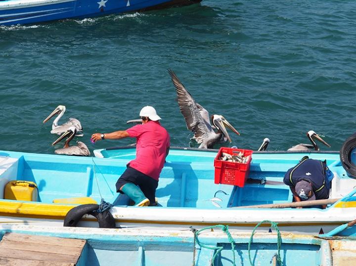 Isla de la Plata  Treasure or Caca? – FRONTIER-FREE DRIFTING