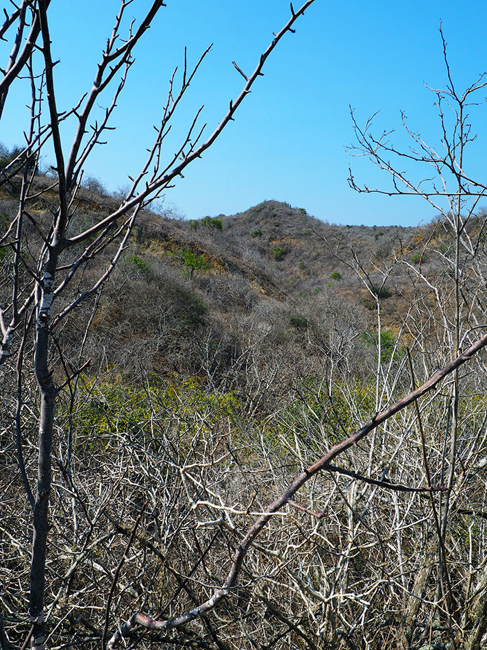 frontier-free-drifting-isla-de-la-plata-tropical-dry-forest