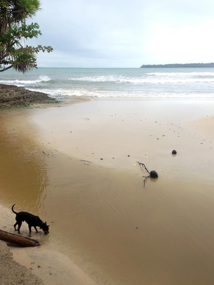 Frontier-Free-Drifting-Cahuita-Beach-Dog